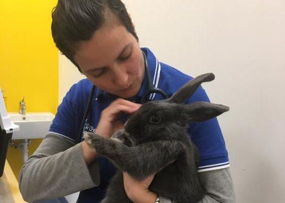 Cinzia Ciarmatori coniglio